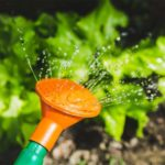 How to Find the Right Gardening Ideas For Your Garden